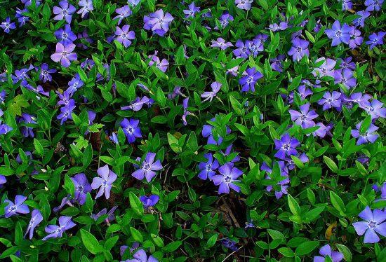 Неприхотливые цветы для клумбы цветущие все лето: описания с фото