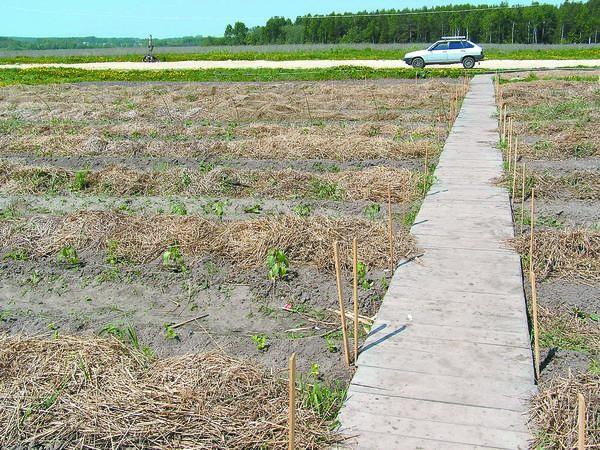 Промышленные рассадники червей на плантации в НПО Грин-Пикъ