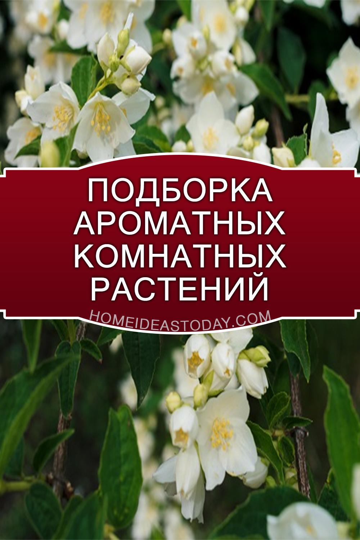 Подборка ароматных комнатных растений