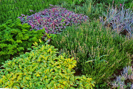 красивые грядки на огороде