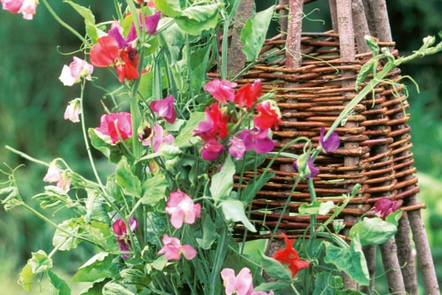 Конусовидная опора для растений