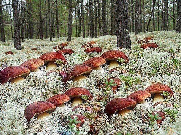 Грибное море. Как сеять грибы